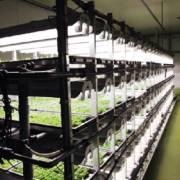Kiều bào góp ý: TP.HCM nên hình thành các vùng nông nghiệp công nghệ cao