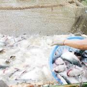Bộ NN&PTNT: Phán quyết của Mỹ lên cá da trơn là 'phi lý, bất công'