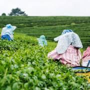 'Malaysia cần tập trung vào nông nghiệp'