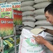 Gạo Việt đang ngày càng lép vế trước gạo Cam, gạo Thái
