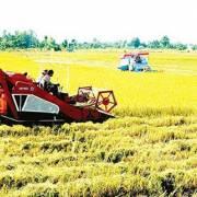 Đề nghị tiếp tục thực hiện thu thuế nông nghiệp sau năm 2020