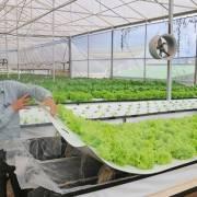 Nông dân Đà Lạt thành công với trồng rau trong không khí