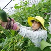 Lê Minh Hoan: Làm gì để tái cơ cấu nông nghiệp thành công?