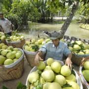 Logistics, 'tử huyệt' của nông sản Việt Nam