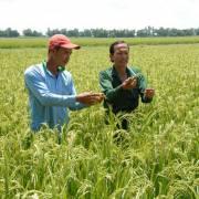 Nông nghiệp không thuốc trừ sâu
