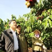 Thực tế đáng buồn của cà phê Việt