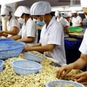 Việt Nam chỉ là xưởng gia công điều thế giới?