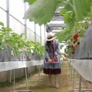 Cách mạng 4.0 trong nông nghiệp: tìm cách tiếp cận hợp lý