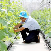 Tiệm cận nông nghiệp 4.0