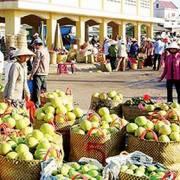 75% rau quả Việt Nam xuất sang Trung Quốc