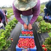 Nông nghiệp hữu cơ không thể và không cần 'nhảy vọt'