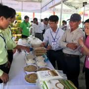 Chợ đầu năm sốt gạo ST24