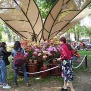 Việt Nam chi 18 triệu USD nhập khẩu hoa, cây cảnh dịp tết