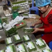 Xuất khẩu rau quả ước đạt 321 triệu USD trong tháng 1/2018
