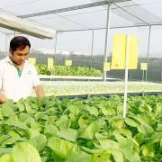 TP.HCM cần 1.500 doanh nghiệp nông nghiệp