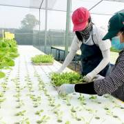 Nông dân TP.HCM bắt đầu được hưởng lợi từ 'công nghệ cao'