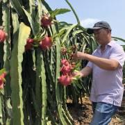Ngành rau quả đang từng bước trở thành trụ cột của nền nông nghiệp VN