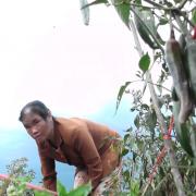Quảng Trị: Nông dân nhận trái đắng từ dự án trồng ớt