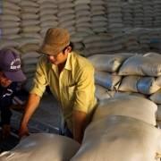 Xuất khẩu gạo đang đối mặt với áp lực cạnh tranh về giá