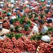 Nông nghiệp Việt Nam 'ít tiêu chuẩn quá'