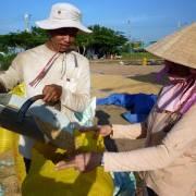 Đã có gạo xuất khẩu đạt ngưỡng 700 USD/tấn