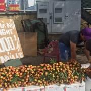 Vải thiều Bắc Giang sắp vào siêu thị TP.HCM