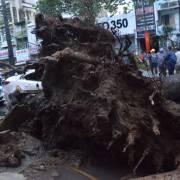 Quy 'trách nhiệm tuyệt đối' khi cây xanh ngã đổ