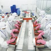 Trung Quốc tạm ngưng nhập tôm đến tháng 9?