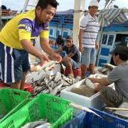 Nông thủy sản rộng cửa vào thị trường Úc