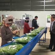 TP.HCM đẩy mạnh sơ chế nông sản tại nguồn