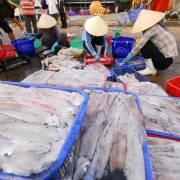 Bộ Nông nghiệp đề nghị kiểm điểm hai cảng cá làm kéo dài thẻ vàng của EU