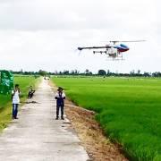 TP.HCM: Nông nghiệp đô thị, diện tích nhỏ vẫn sống khỏe nhờ công nghệ