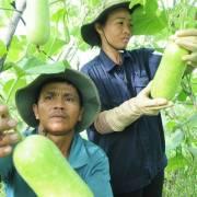 Hàn Quốc kiểm soát chặt hàng nông sản nhập khẩu