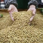 Nhiều nước đổ xô mua đậu nành Mỹ sau khi Trung Quốc tăng thuế