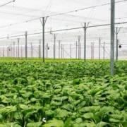 Chính phủ ban hành Nghị định riêng về nông nghiệp hữu cơ