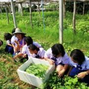 Rau sạch ở Khon Kaen