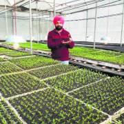 Startup làm nông kiểu khác ở Ấn Độ