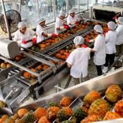 Thay đổi tư duy xuất khẩu nông sản