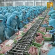 VASEP: Cá tra bị cạnh tranh gay gắt tại EU