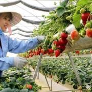 Công nghệ trồng rau củ hộ gia đình, tưởng dễ mà khó