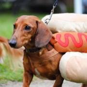 Hot dog, nóng nhưng không có… chó