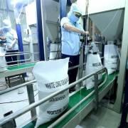 Việt Nam không thiếu gạo, nên tận dụng lúc giá cao để xuất khẩu