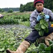 Nhật Bản chấp nhận người nhập cư để bù đắp dân số già?