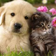 Chuyện đời thường: Chuyện chó – chuyện mèo