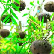 [Video]: Cô giáo xứ dừa khởi nghiệp với gáo dừa
