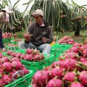 Trung Quốc mua 2,4 tỷ USD rau quả Việt Nam trong 10 tháng