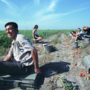 Hàng triệu người Trung Quốc đang rời phố về quê làm nông nghiệp