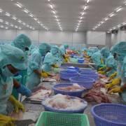 CPTPP: Nhật Bản xóa bỏ 86% thuế quan từ Việt Nam, thủy sản về 0%