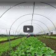 [Video] Happy Vegi trang trại rau hữu cơ trên cao nguyên