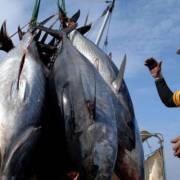 Thanh tra EC sẽ kiểm tra việc khắc phục 'thẻ vàng' của thủy hải sản Việt Nam